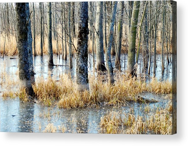 Winter Acrylic Print featuring the photograph Frozen Forest by Crissy Sherman
