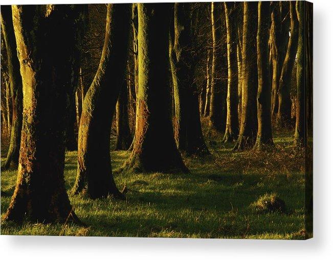 Cork Acrylic Print featuring the photograph Glenville Woods, County Cork, Ireland by Richard Cummins