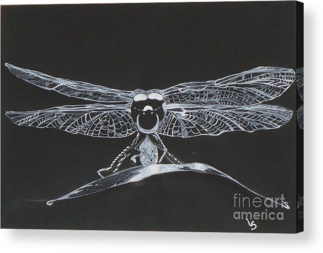 Lace Acrylic Print featuring the drawing Lace Wings by Leigha Sherman