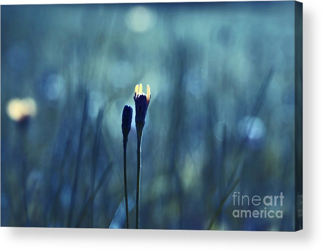 Blue Acrylic Print featuring the photograph Le Centre De L Attention - Blue S0203d by Variance Collections
