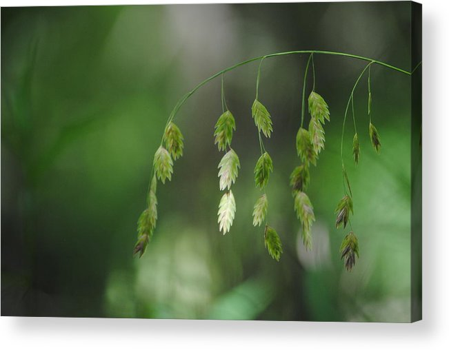 Weeds Acrylic Print featuring the photograph Natures Mobile by Dottie Dees