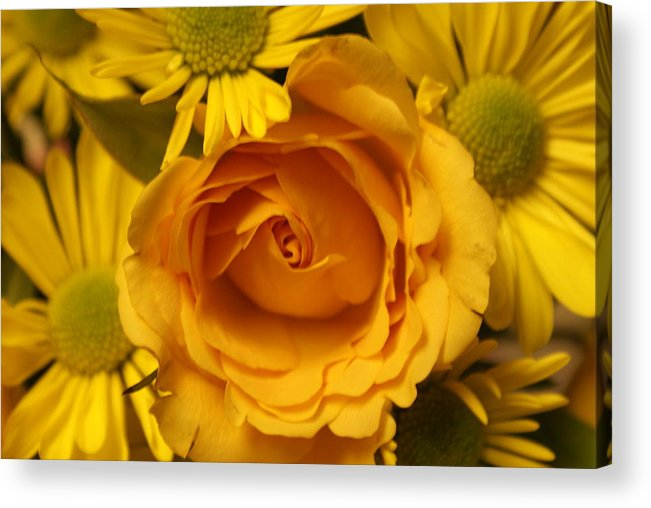 Peach Rose Acrylic Print featuring the photograph Peach Rose-yellow Daisies by William Ohanlan