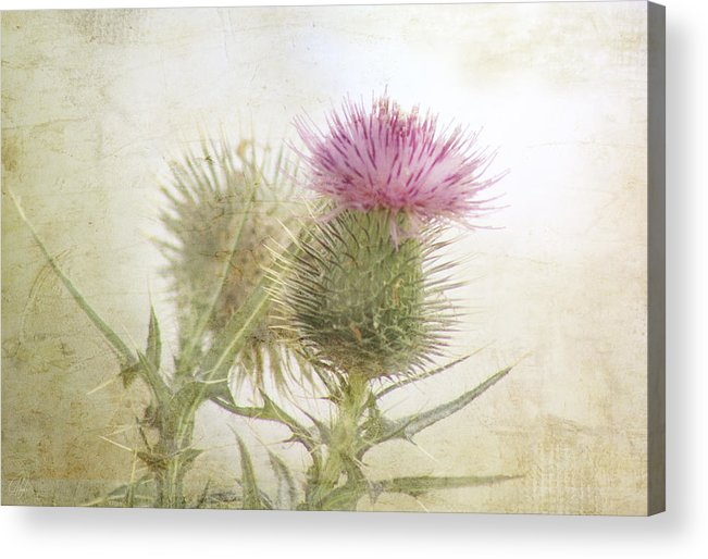 Kim Klassen Acrylic Print featuring the digital art Pink On Green by Margaret Hormann Bfa