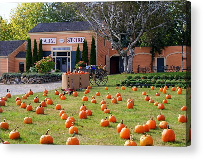 Pumpkins Acrylic Print featuring the photograph Pumpkins Everywhere by Lois Lepisto