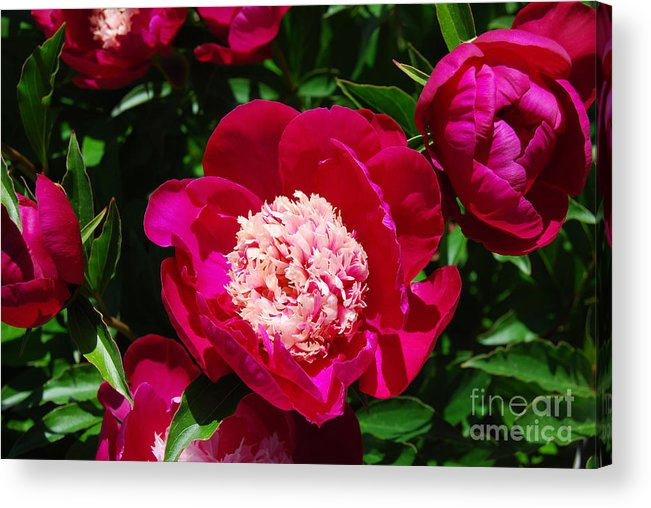 Red Peony Flower Acrylic Print featuring the digital art Red Peony Flowers Series 3 by Eva Kaufman