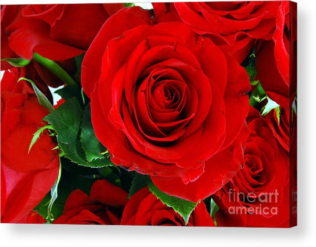 Roses Acrylic Print featuring the photograph Roses by Ben Haslam