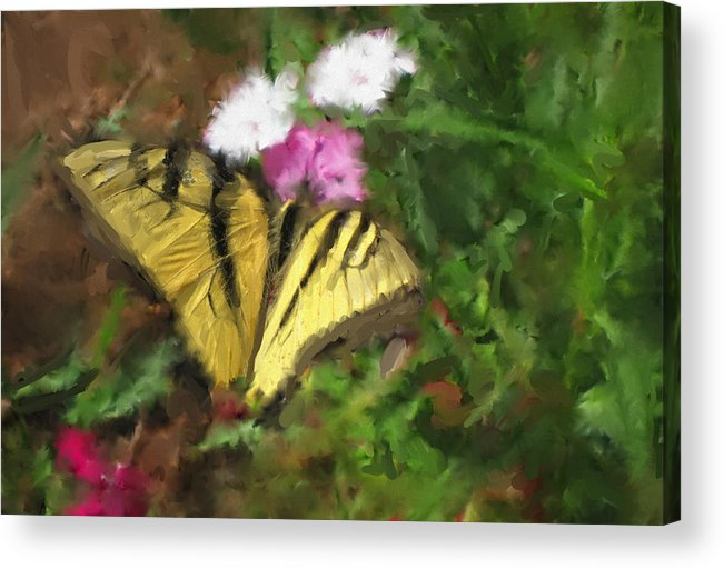 Yellow Butterfly Acrylic Print featuring the painting Spring Butterfly by Carolyn Whitaker