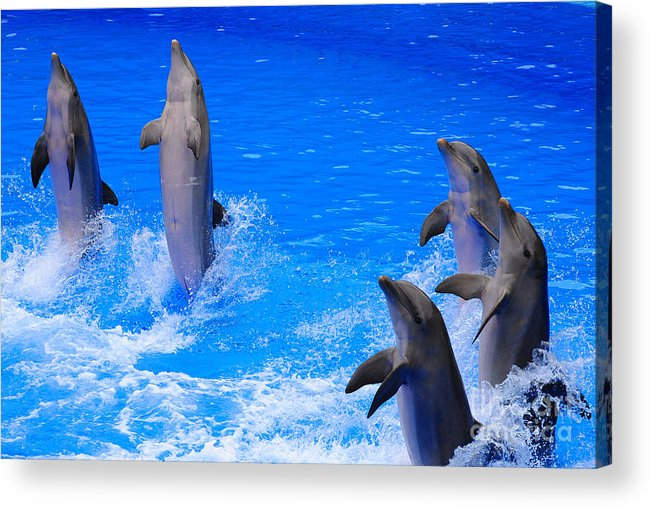 Dolphin Acrylic Print featuring the photograph Standing To Attention by Rob Hawkins