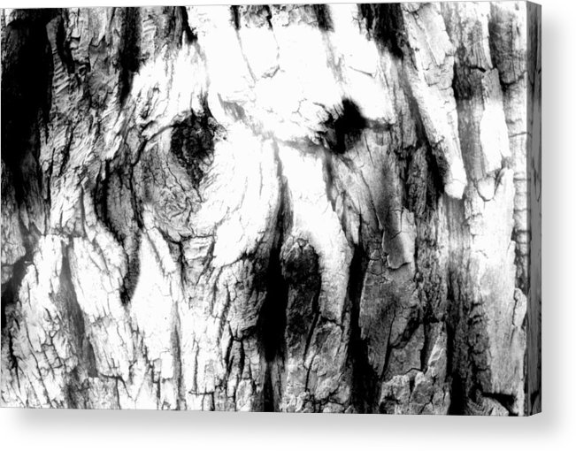 Dog Acrylic Print featuring the photograph The Face In The Tree by Annie Nelson
