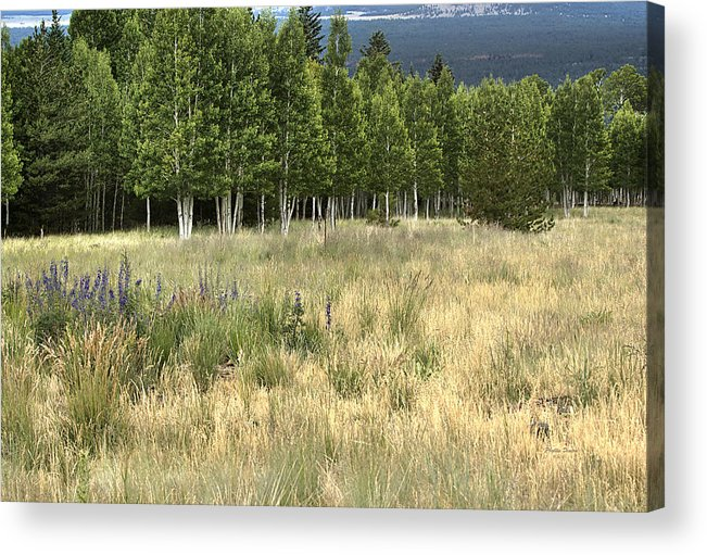 Landscape Acrylic Print featuring the photograph The Meadow by Phyllis Denton