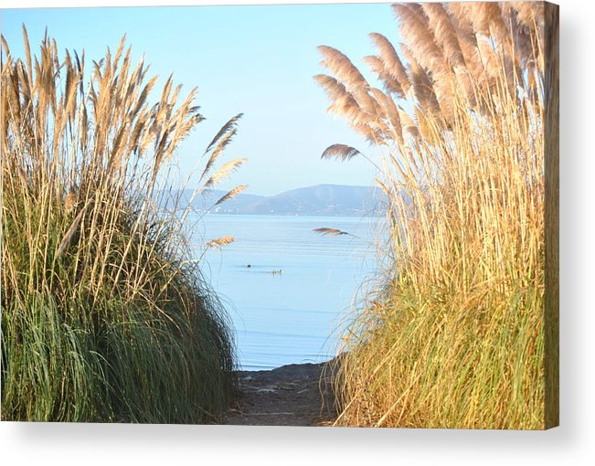 Alameda Acrylic Print featuring the photograph Through The Clearing by Nimmi Solomon