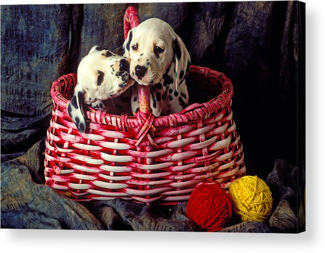 Two Dalmatian Acrylic Print featuring the photograph Two Dalmatian Puppies by Garry Gay