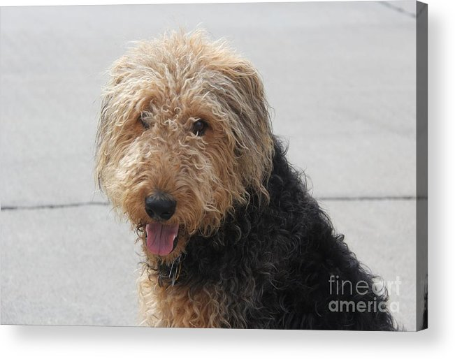 Dogs Acrylic Print featuring the photograph Well Trained Dog by Yumi Johnson