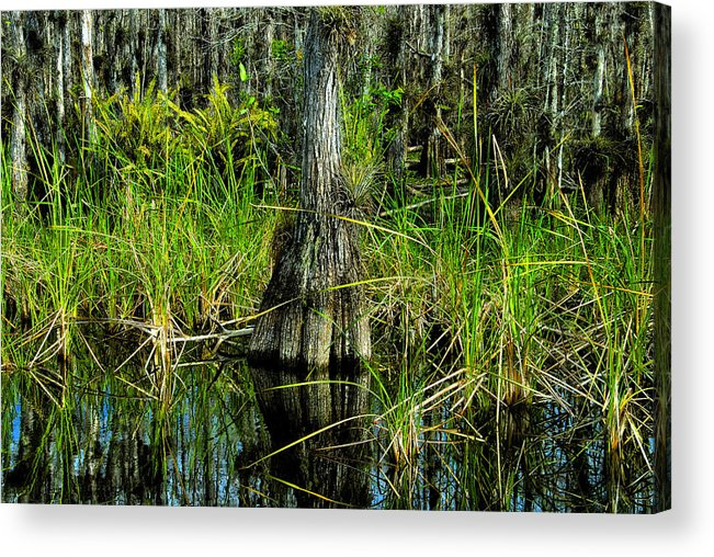Cypress Trees Acrylic Print featuring the painting Cypress Tree by David Lee Thompson