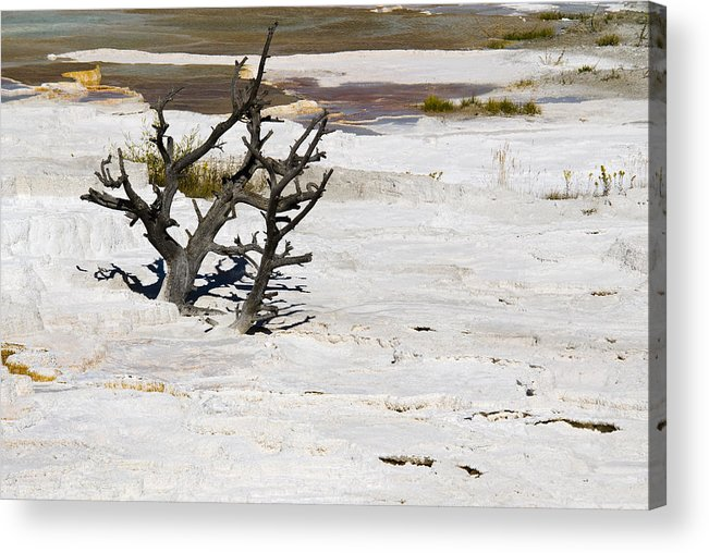 Yellowstone Acrylic Print featuring the photograph Desolate by Chad Davis