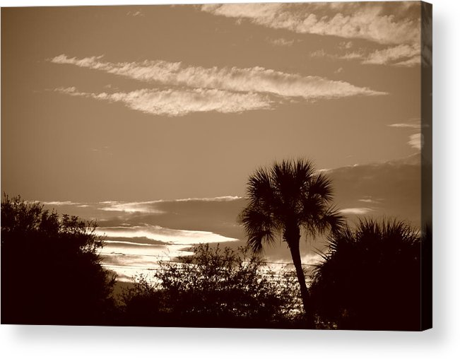 Sepia Acrylic Print featuring the photograph Palms In The Clouds by Rob Hans