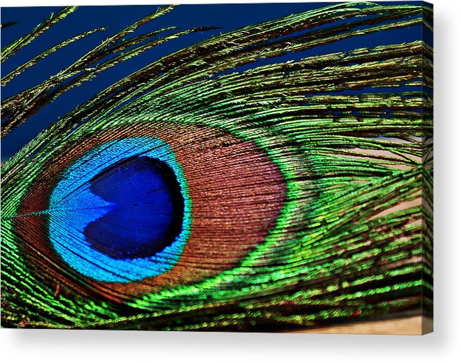 Photography Acrylic Print featuring the photograph Peacock by Amber Snead