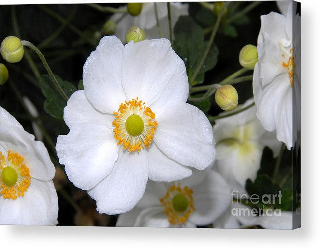 White Acrylic Print featuring the photograph White Wonder by David Lee Thompson