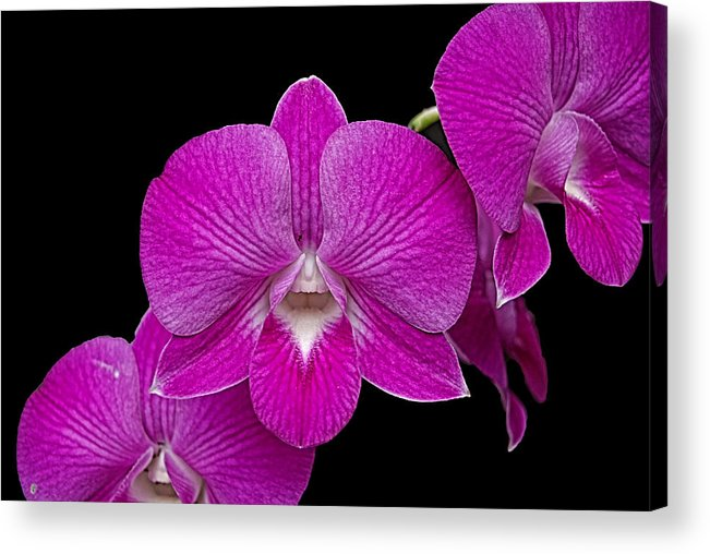 Orchid Acrylic Print featuring the photograph Orchid by Galeria Trompiz