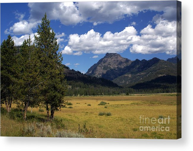 Yellowstone National Park Acrylic Print featuring the photograph Yellowstone Vista by Marty Koch