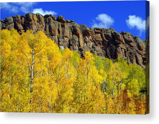 Fall Colors Acrylic Print featuring the photograph Aspen Glory by Marty Koch