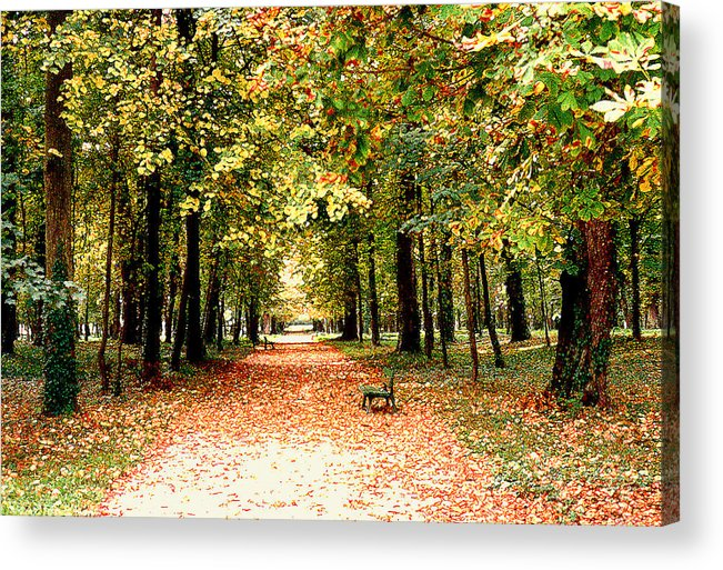Autumn Acrylic Print featuring the photograph Autumn In The Park by Nancy Mueller