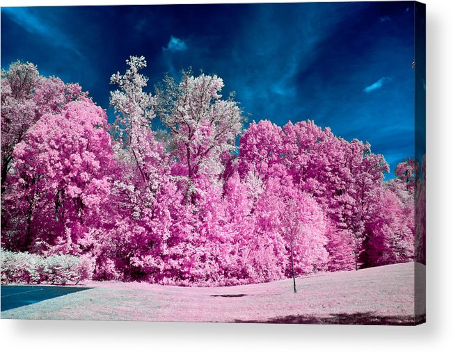 Infrared Acrylic Print featuring the photograph Autumn Trees In Infrared by Louis Dallara