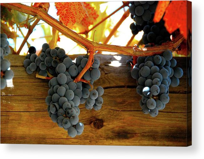 Grapes Acrylic Print featuring the photograph Before The Press by Lori Leigh