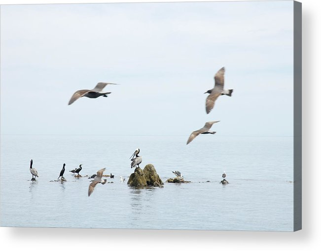 Seagull Acrylic Print featuring the photograph Birds by Elisa Locci