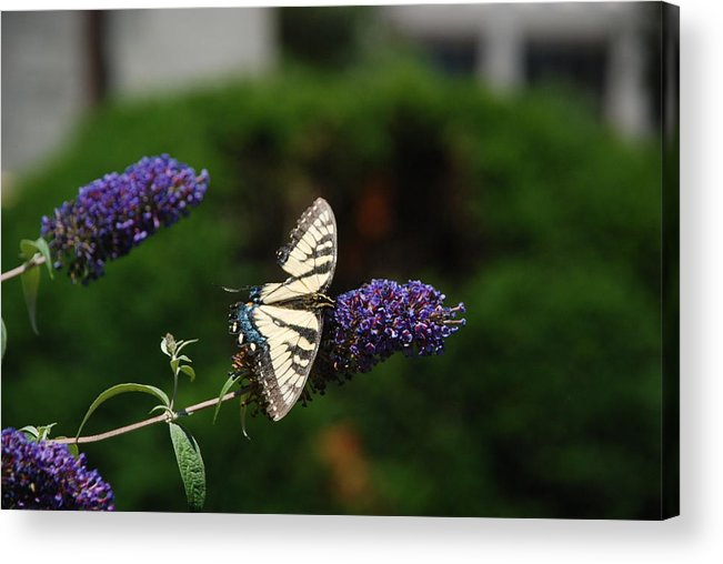 Purple Flower Acrylic Print featuring the photograph Broken Wing by Renee Holder