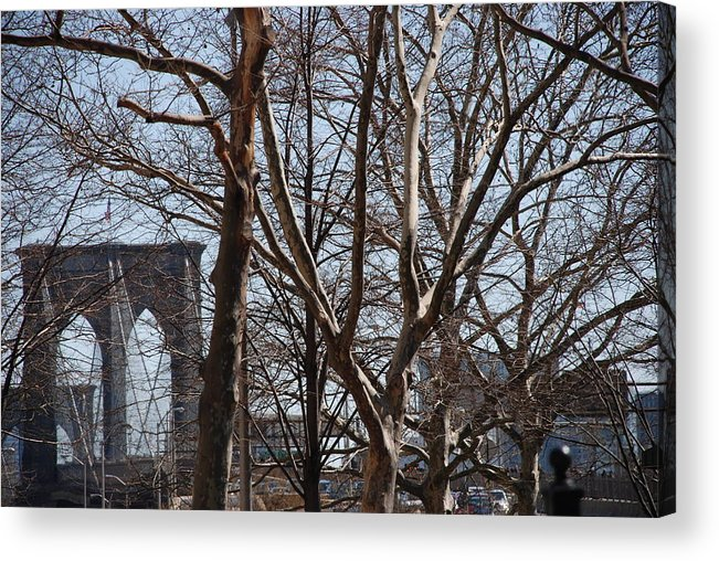 Architecture Acrylic Print featuring the photograph Brooklyn Bridge Thru The Trees by Rob Hans