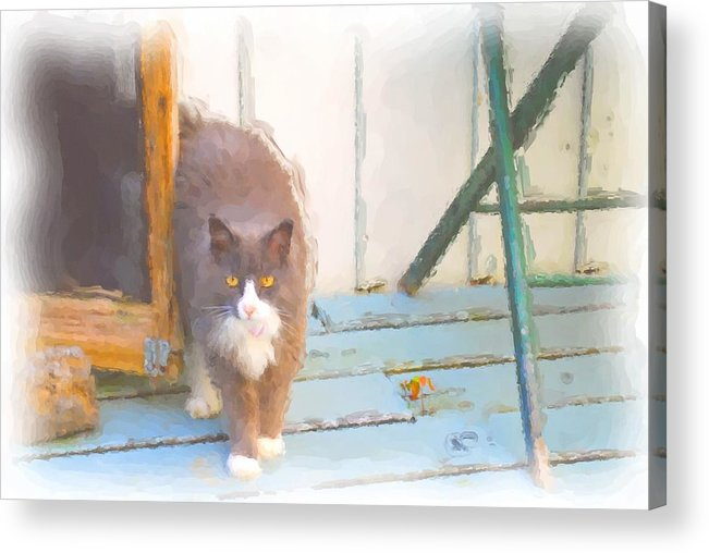 A Grand Pussy Cat Welcome To My Home Acrylic Print featuring the digital art Bryant Pond Cat by Jonathan Galente