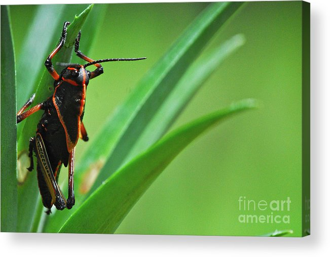 Amazing Acrylic Print featuring the photograph Buen Apetito by Cesar Marino