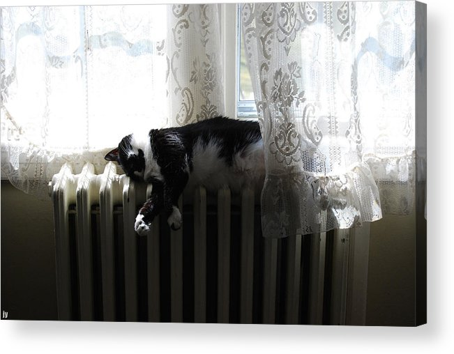 Cat Acrylic Print featuring the photograph Cat Nap by Gerard Yates