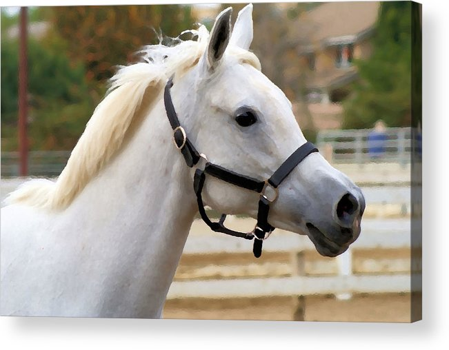 Horse Acrylic Print featuring the photograph Cloud by Ellen Lerner ODonnell
