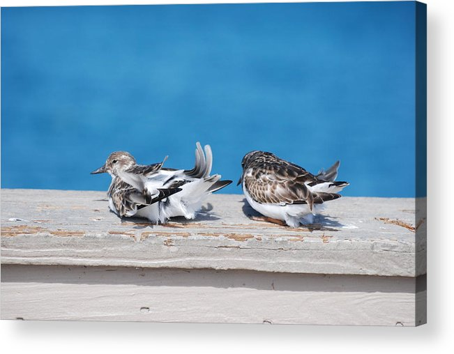 Bird Acrylic Print featuring the photograph Cold Birds by Rob Hans