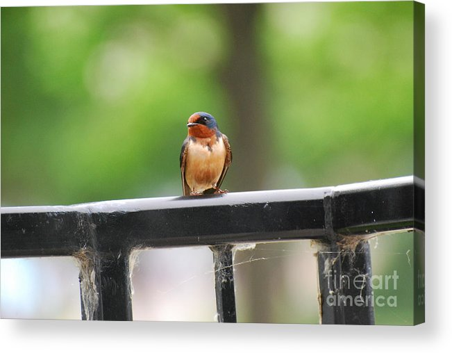 Colorful Acrylic Print featuring the photograph Colorful Bird On Railing by StudioBoldt  Photography