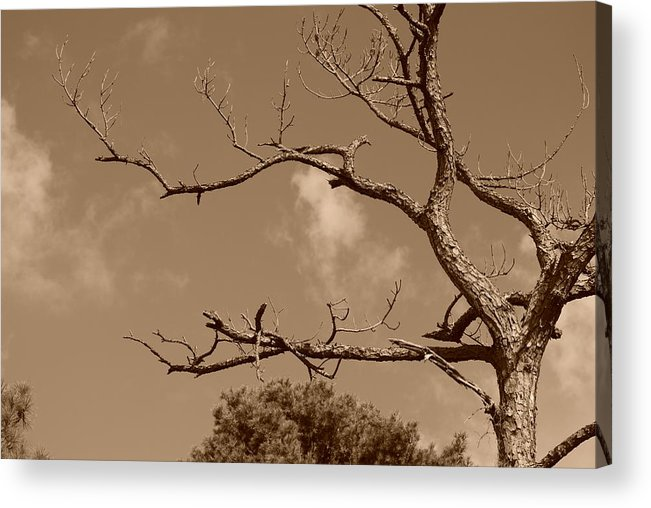 Sepia Acrylic Print featuring the photograph Dead Wood by Rob Hans
