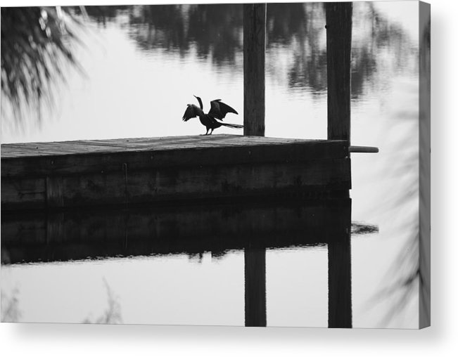 Black And White Acrylic Print featuring the photograph Dock Bird Pre Flight by Rob Hans