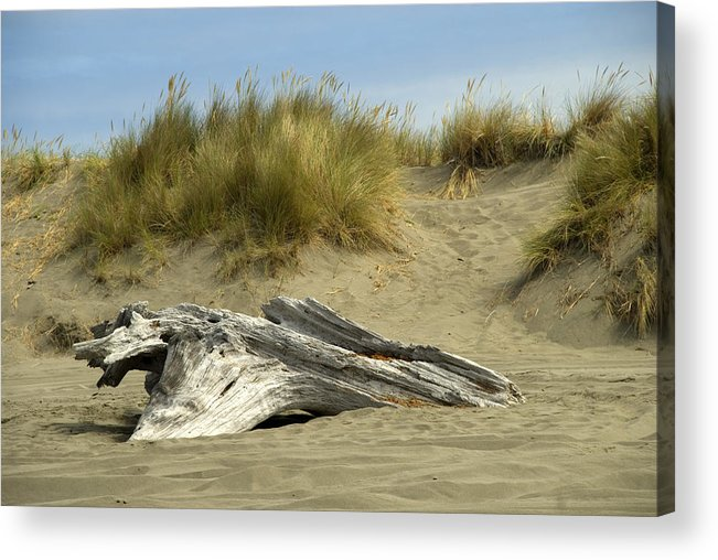 Wood Acrylic Print featuring the photograph Driftwood by Jessica Wakefield
