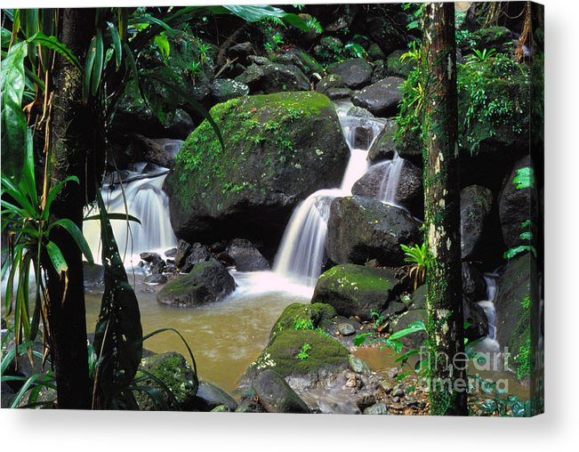 Puerto Rico Acrylic Print featuring the photograph El Yunque National Forest Waterfall by Thomas R Fletcher