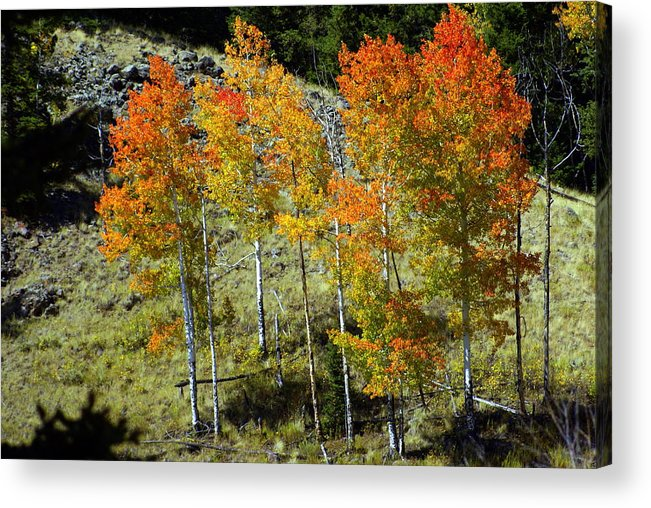 Acrylic Print featuring the photograph Fall In Colorado by Marty Koch