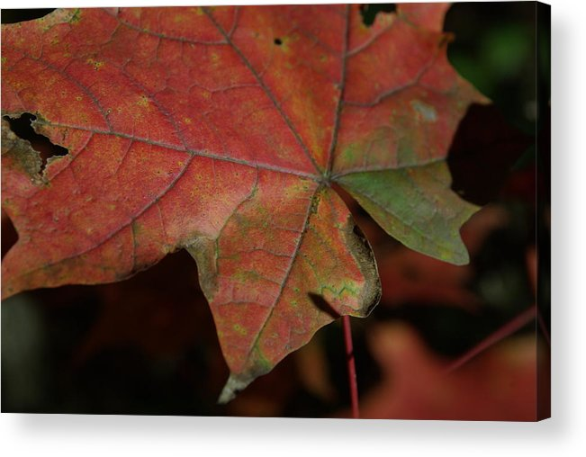 Fall Acrylic Print featuring the photograph Fall Leaves 1 by Eric Workman