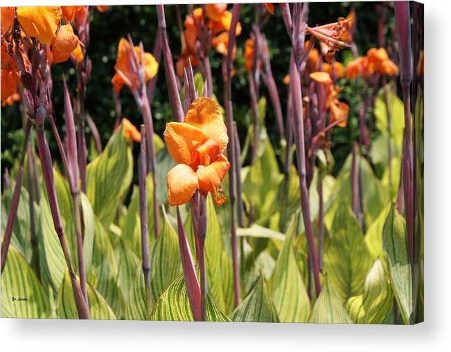 Floral Acrylic Print featuring the photograph Field For Iris by Shelley Jones