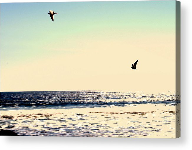 Dawn Acrylic Print featuring the photograph Flight Of Dawn by Brandon Wernke