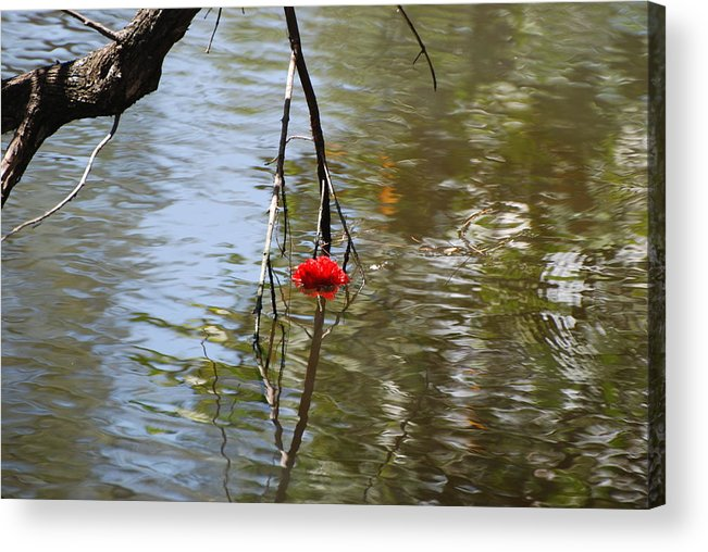 Water Acrylic Print featuring the photograph Floating Flower by Rob Hans