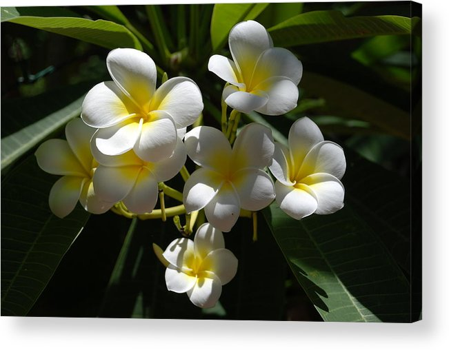Nature Acrylic Print featuring the photograph Floral Beauties by Rob Hans