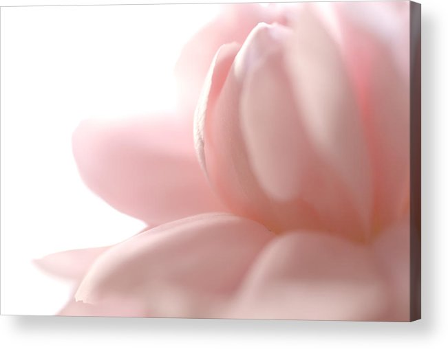 Pink Acrylic Print featuring the photograph Flower Abstract by Jessica Wakefield