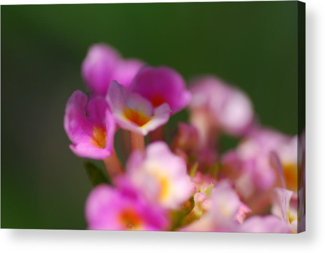 Flowers Acrylic Print featuring the photograph Flowers In The Shade by Stephen Leckemby