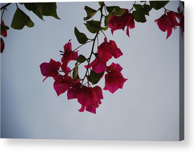 Flowers Acrylic Print featuring the photograph Flowers In The Sky by Rob Hans